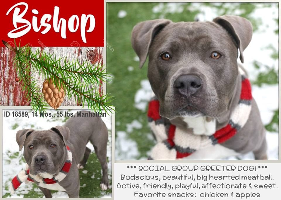 Image may contain dog and text Dogs, Pet adoption