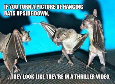 Thriller bats | Just for fun