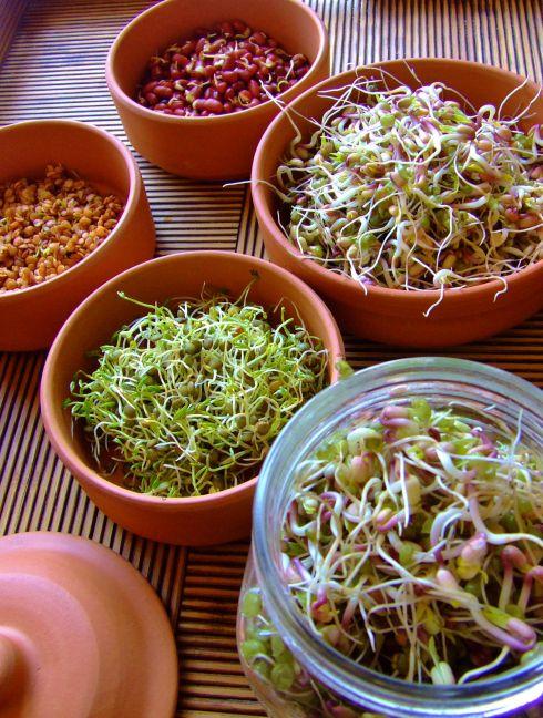 Se puede comer brotes de soja crudos