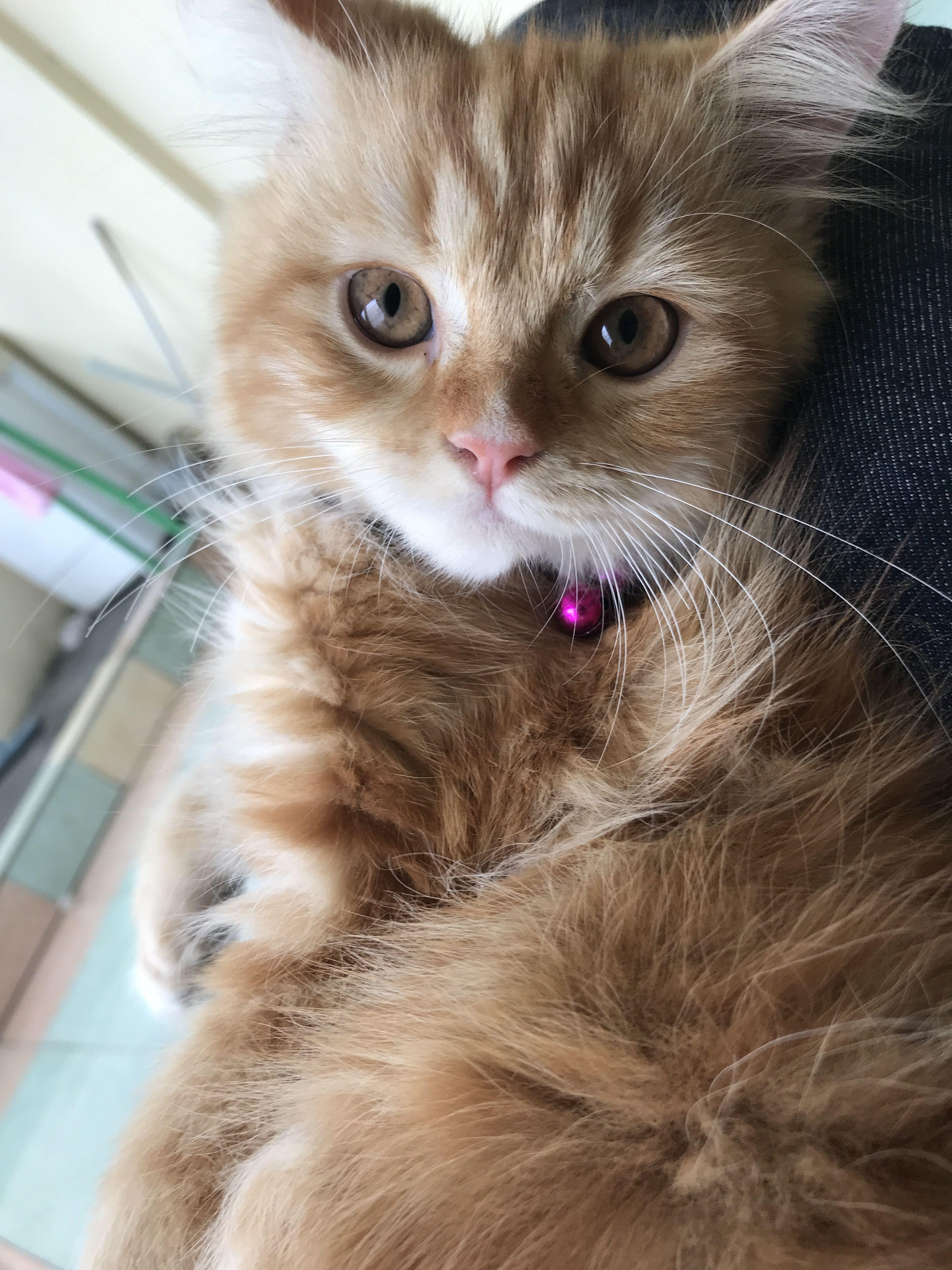 My Kitten (With images) Kociaki