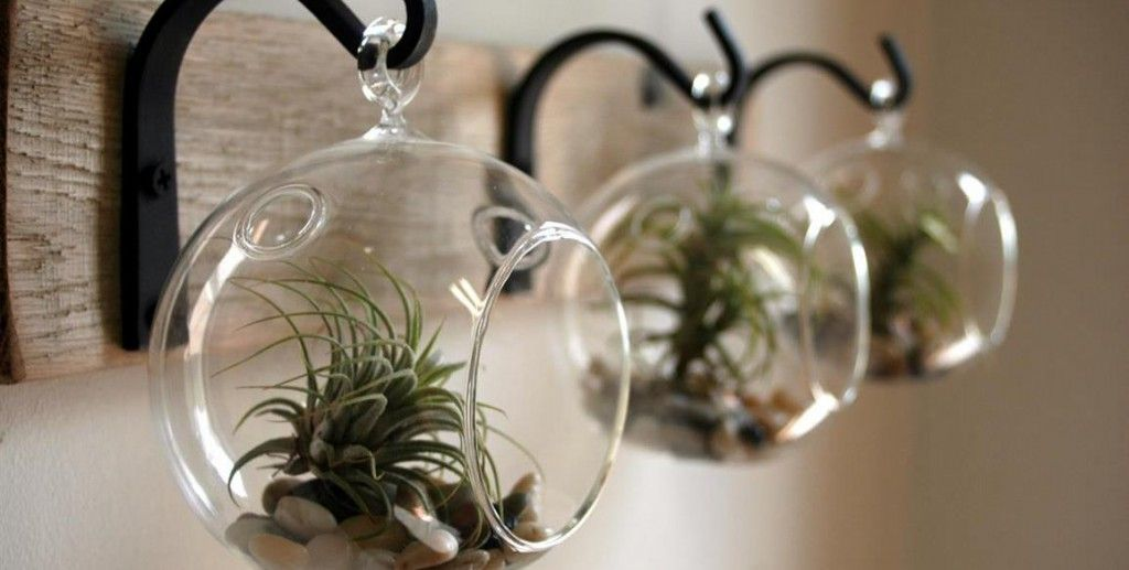 Mini cactus garden in glass