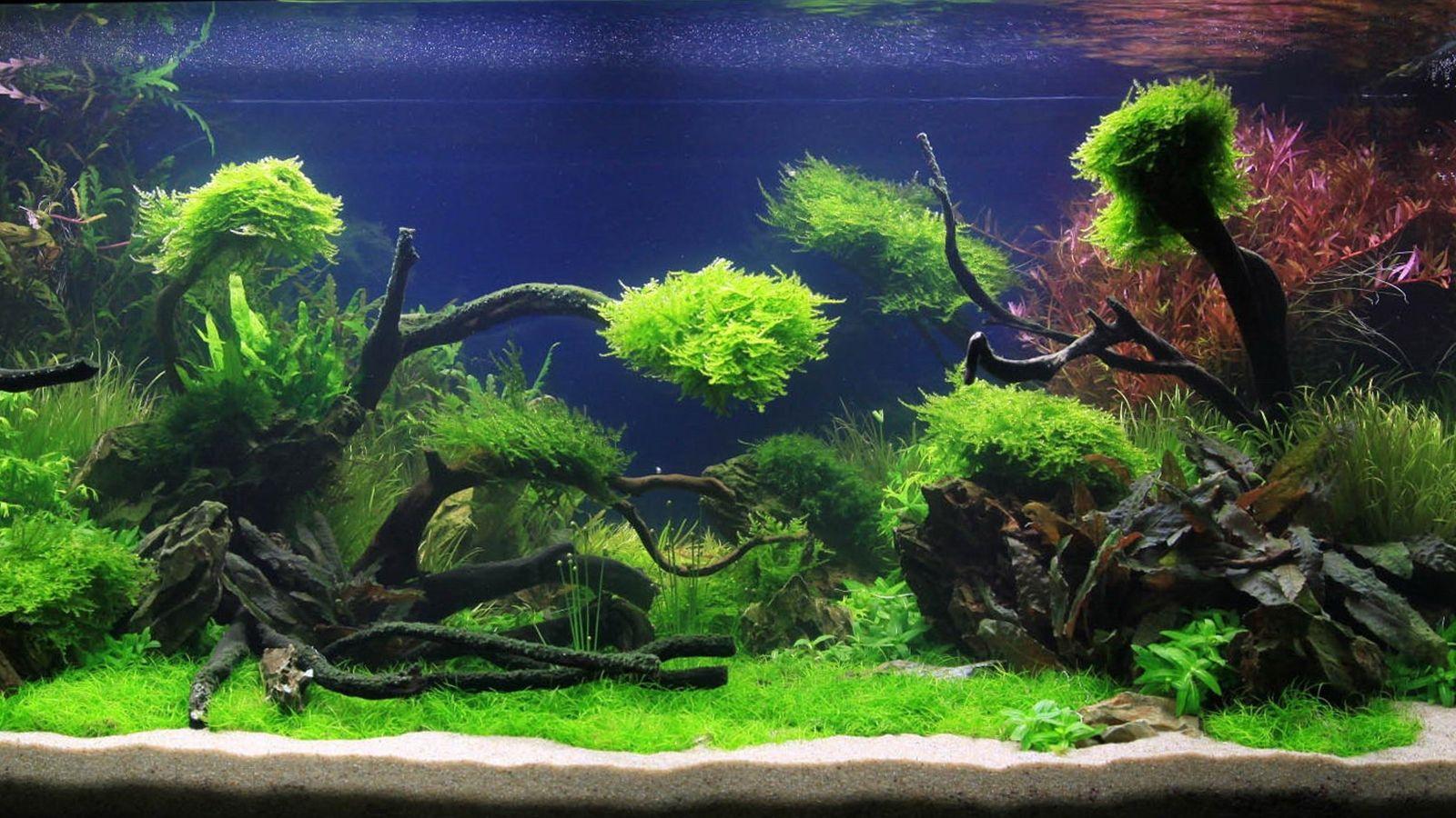 青と緑のコントラストが絶妙な水槽 アクアリウム の壁紙 脳に良い効果を与えてくれると言う水槽 アクアリウム のデスクトップ壁紙集 Naver まとめ Aquarium Landscape Aquascape Aquascape Aquarium
