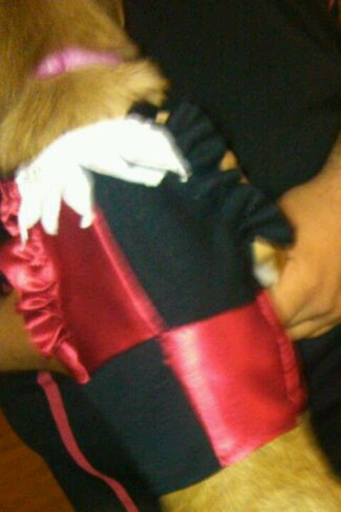 Harley Quinn costume I made for my dog Harley :)