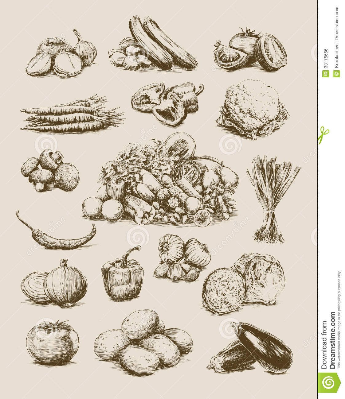 Vintage Vegetable Drawing Google Search How To Draw Hands Plant Sketches Dragon Tattoo Vector