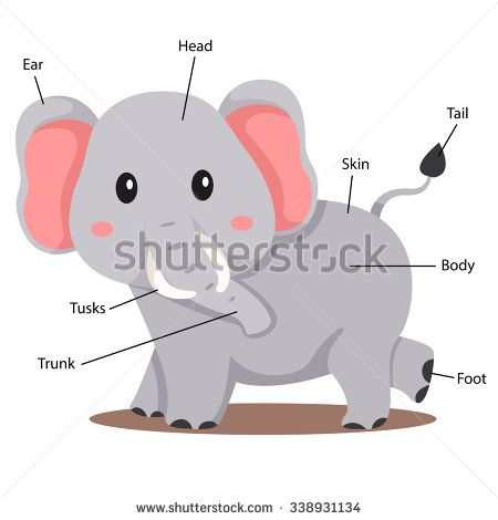 Illustrator of elephant body part | English Lesson | Pinterest ...