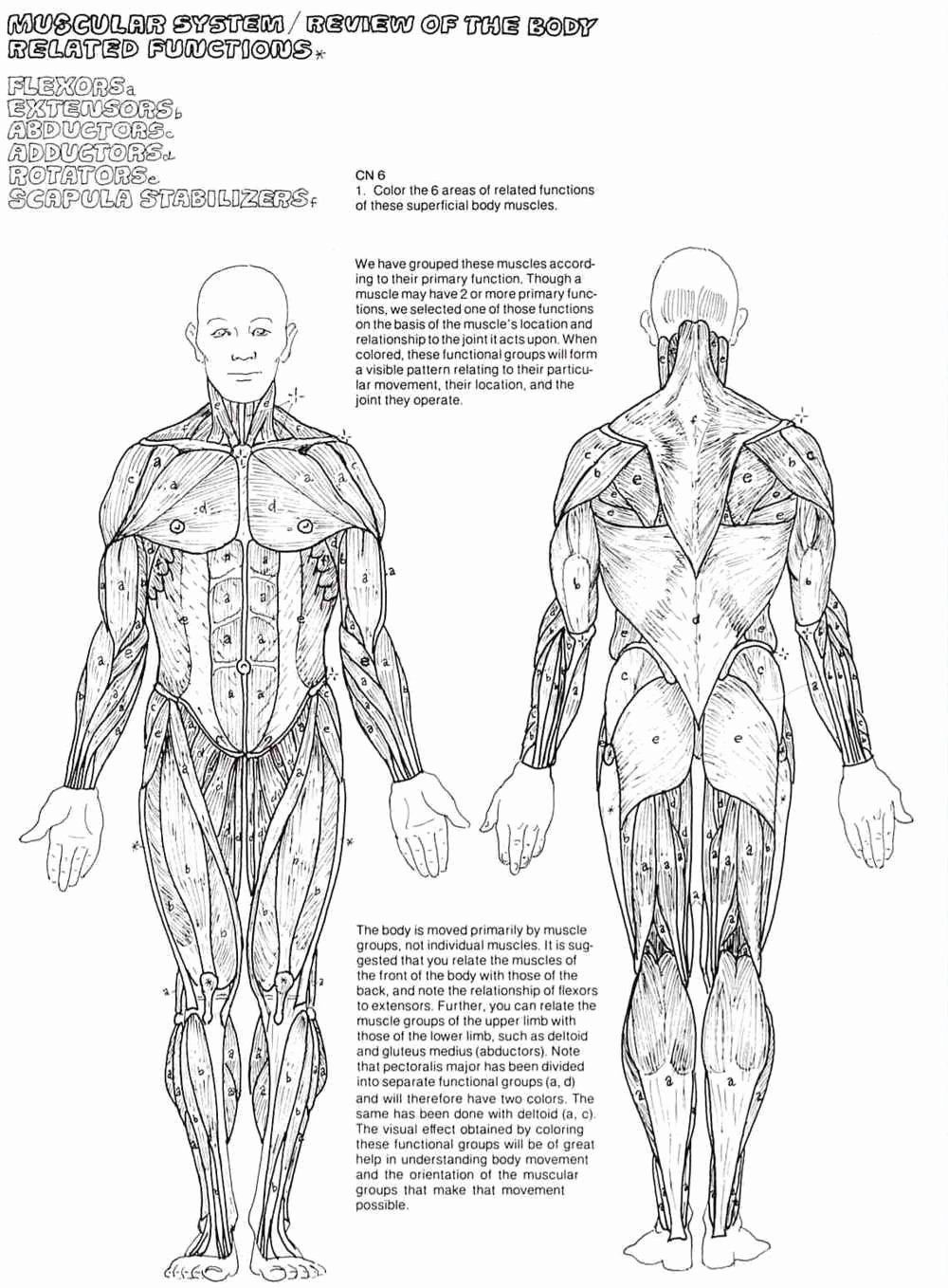 32 Human Anatomy Coloring Book In 2020 Anatomy Coloring Book