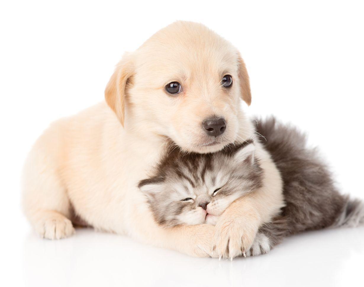 Jos kiltteys ei tule ihan luonnostaan, sitä kannattaa silti yrittää lypsääitsestään. Vaikka edes itsekkäistä syistä!