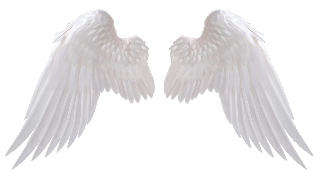 Image Result For Angel Wings Png Fotos De Alas De Angel Alas De Angel Png Alas De Angel