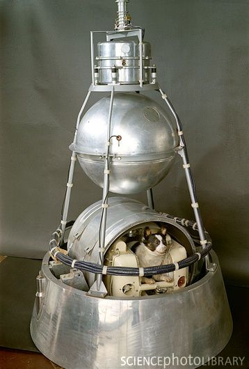 Sputnik Ii Launched Laika Earth S First Space Traveler