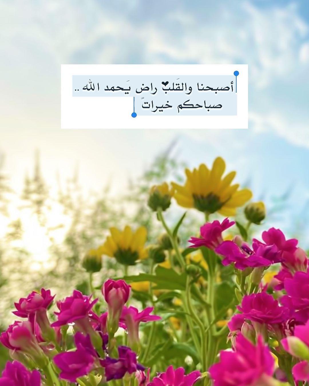 Pin By Aida Alrohili On صباح الخير Good Morning Morning Images Plants Image