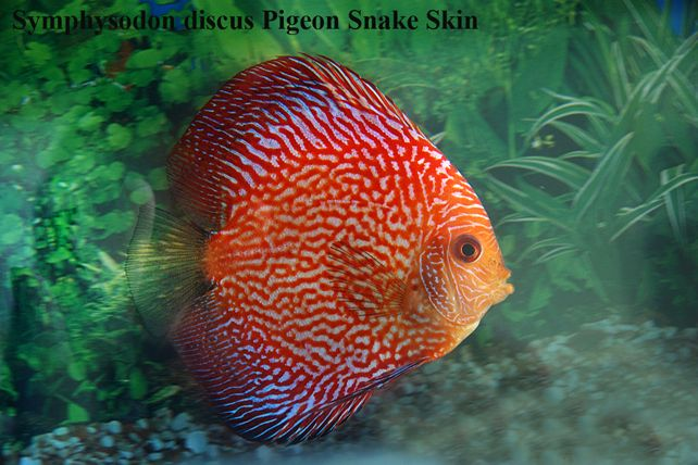 Pin On Aquariums And