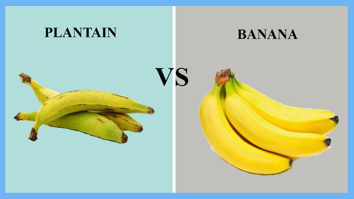 Pin Auf Plantain Vs Banana