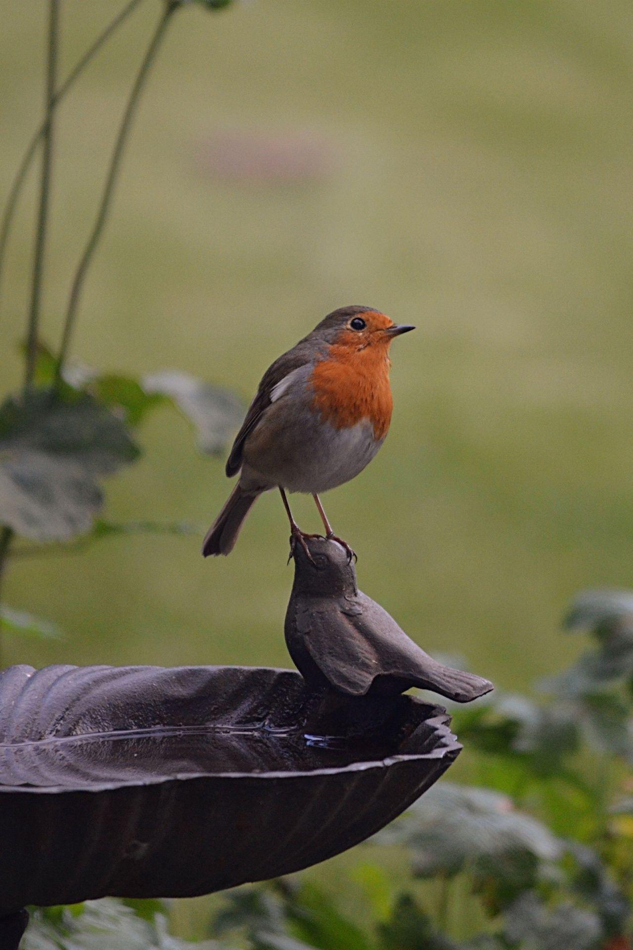 Robins Kitchen Garden City A Real Bird Standing On The Head Of An Ornamental Bird On A