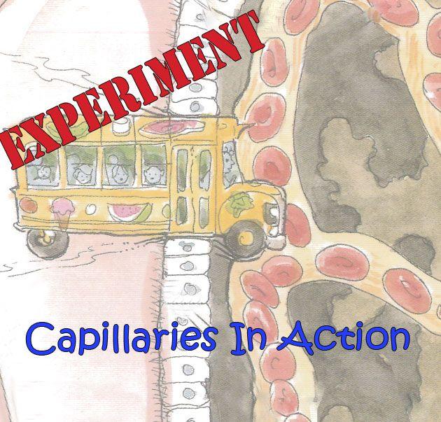 Stem School Bus Org: #Teachers: Help Your Students Understand How Veins Work