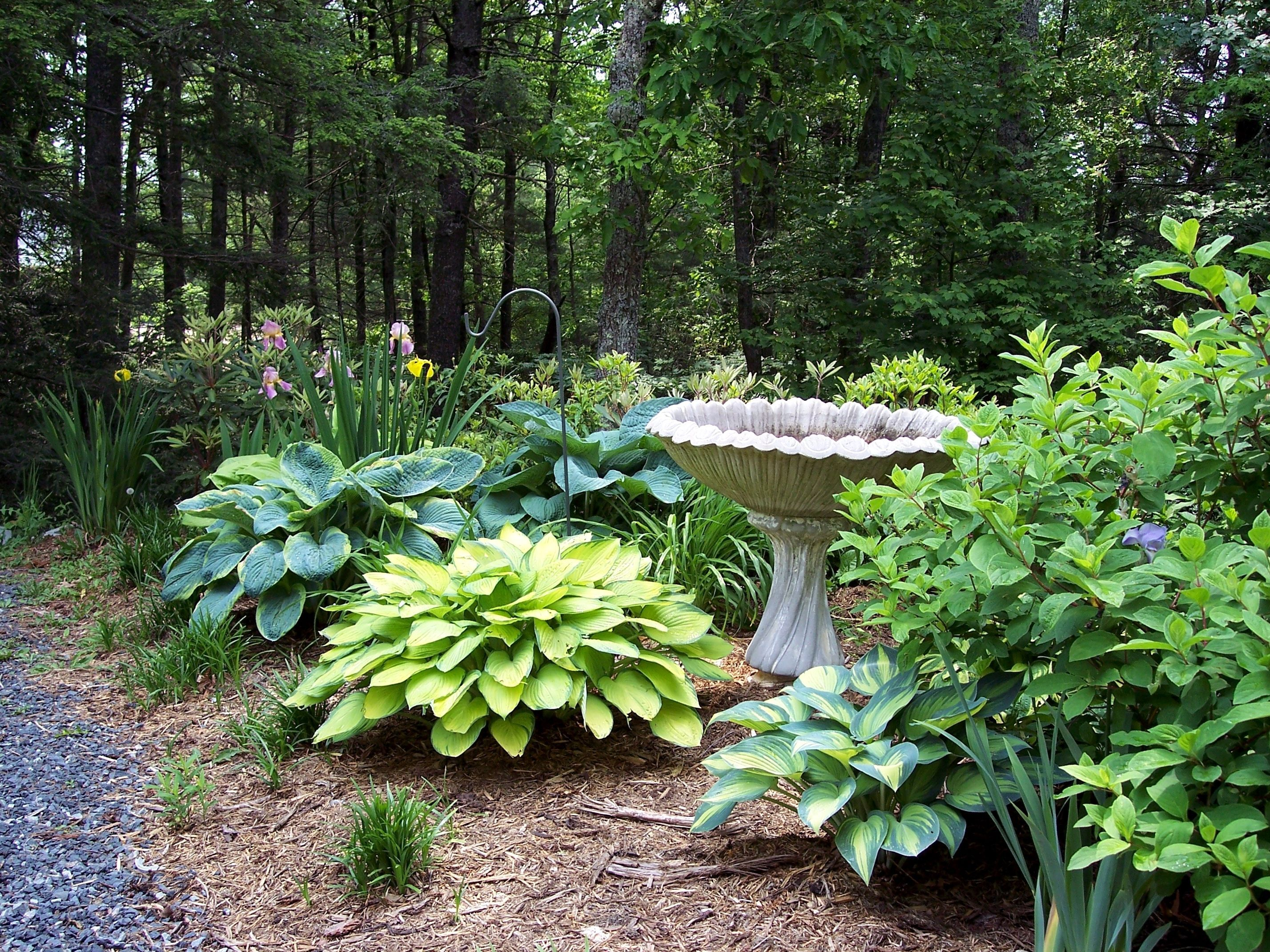 easy and affordable landscaping ideas google search landscaping