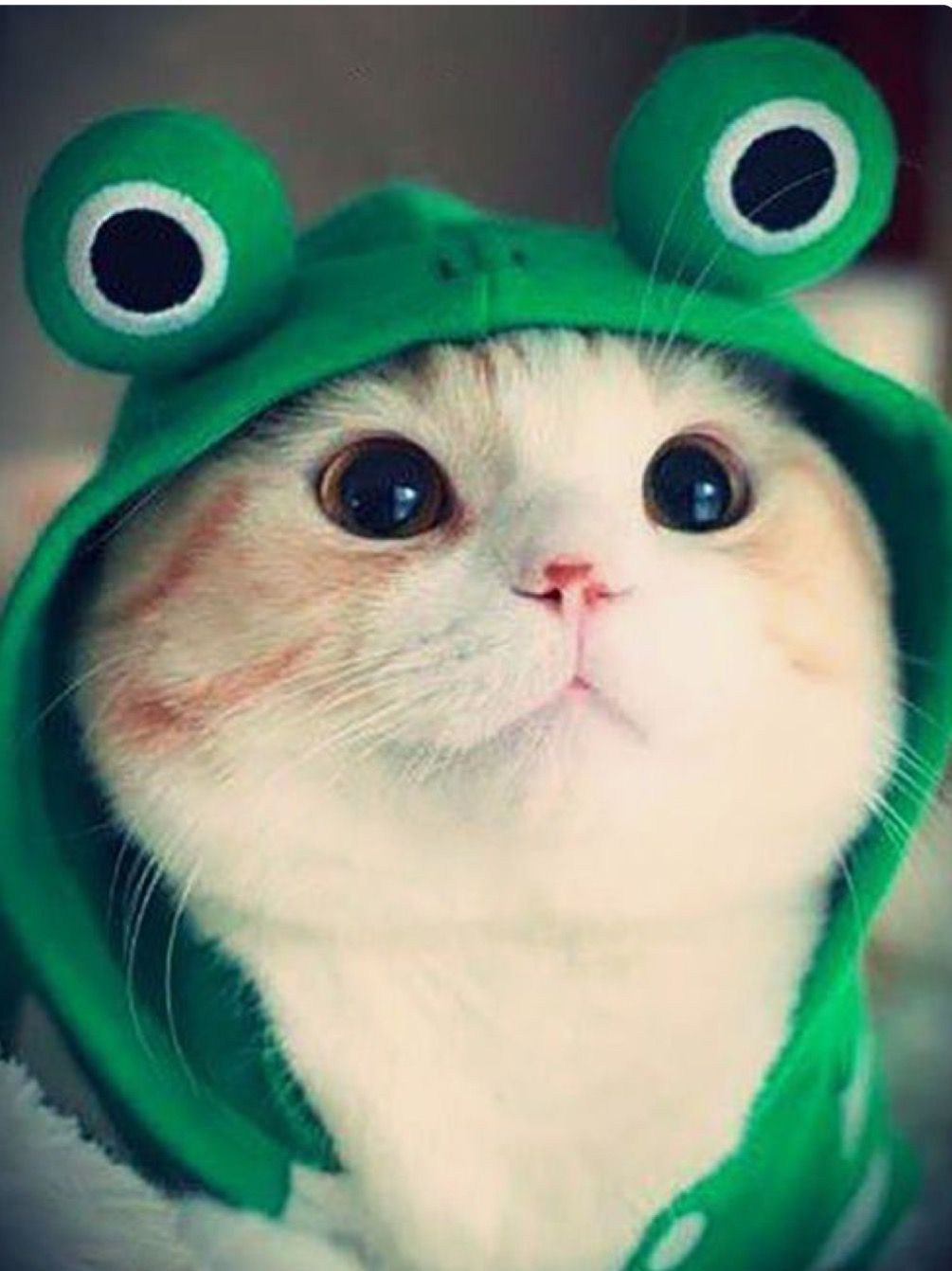 Frog Hat Kittens Cutest Cute Cats Cats And Kittens