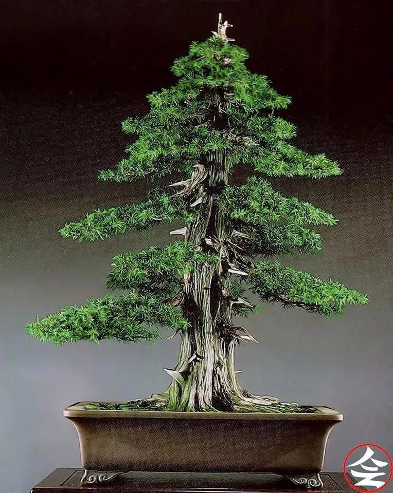 Bonsai Trees Guide for Beginners Bonsai tree care