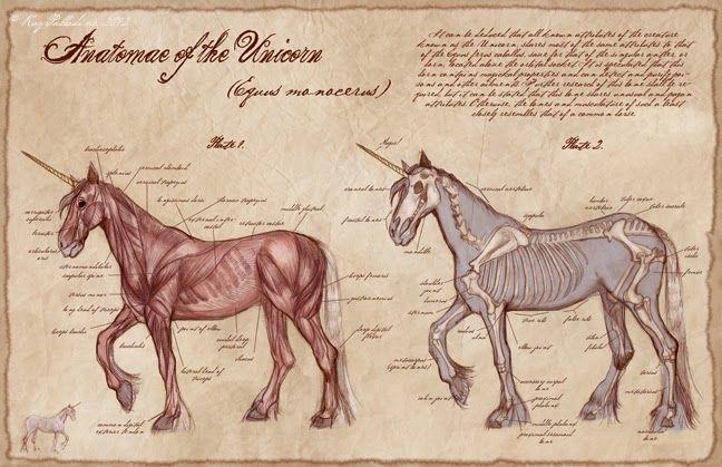 ANATOMÍA DE SERES MAGICOS | Anatomia de seres magicos | Pinterest ...