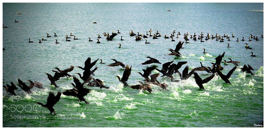 Birds... de muhamedthabreez