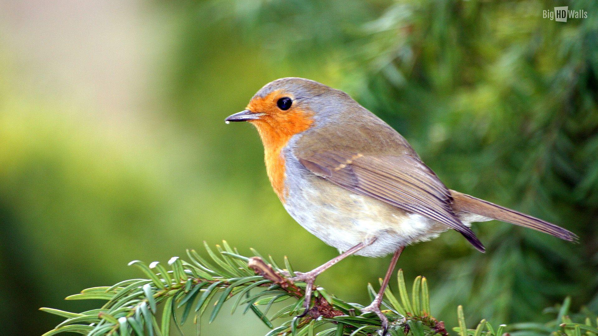 Beautiful Bird Desktop Background Picture Bighdwalls
