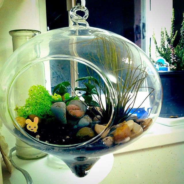 Tried making a terrarium for the first time. The bunny's name is Earl.