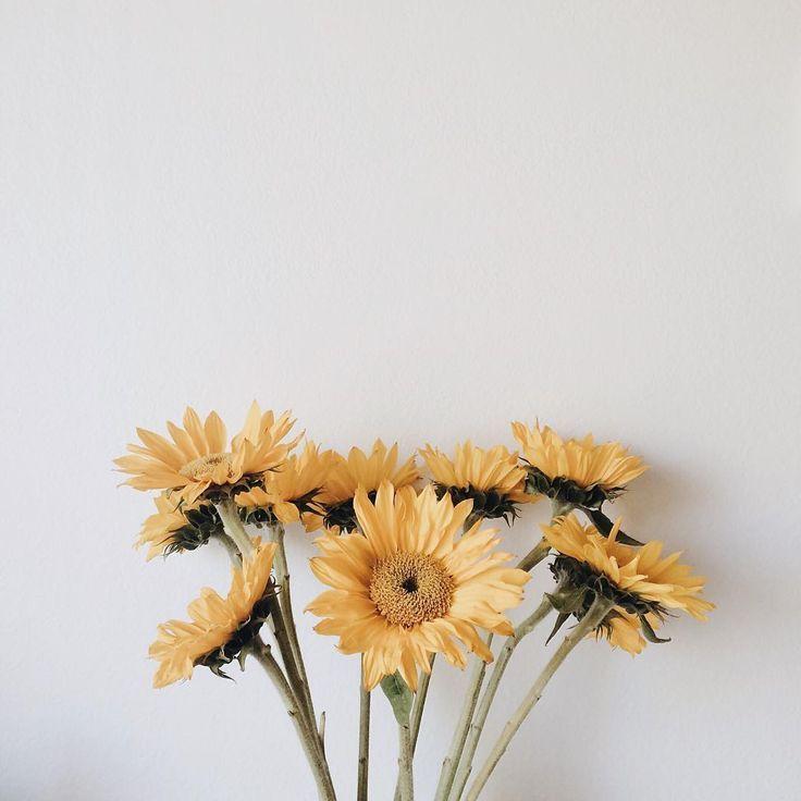 Flower Aesthetic, Flowers, Plants