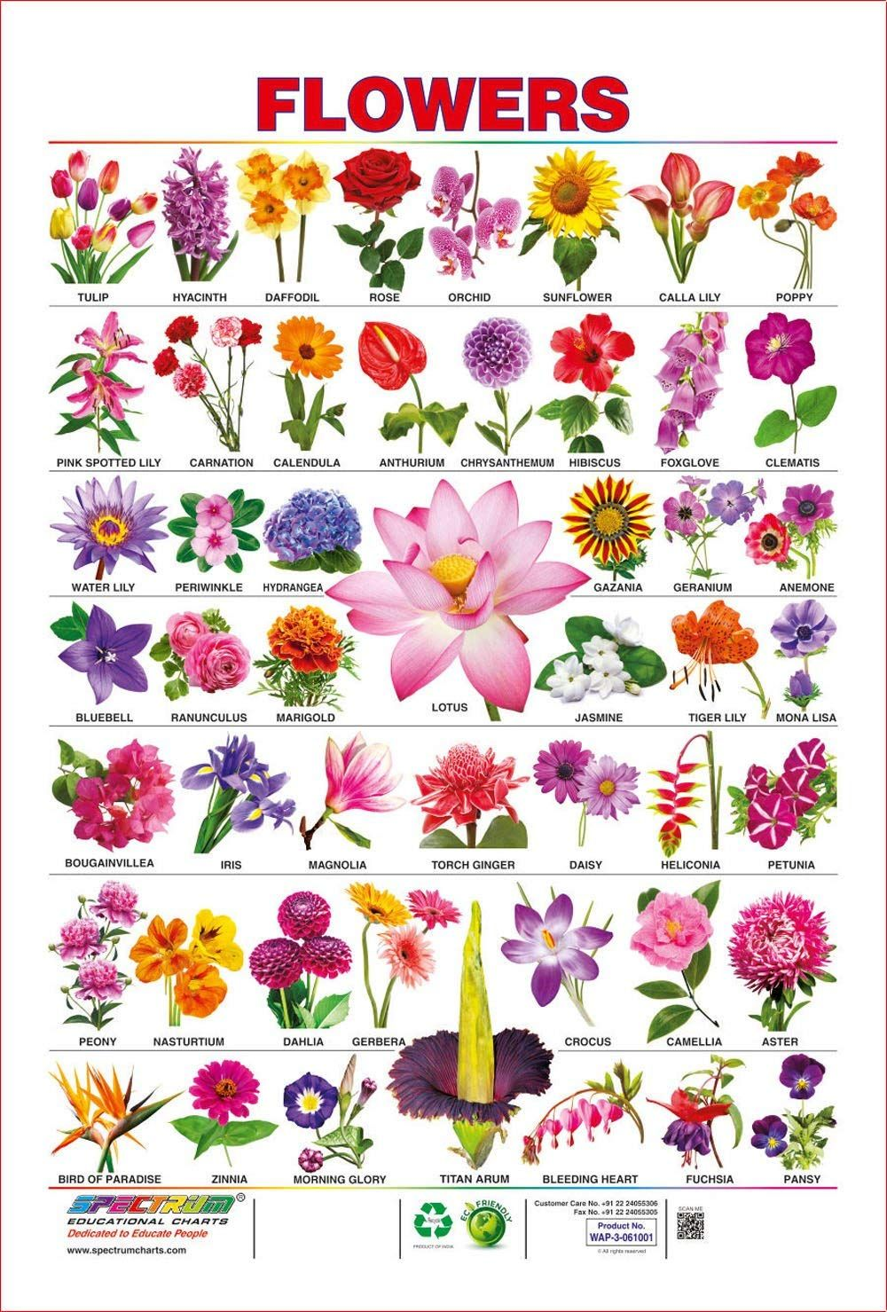 Spectrum Pre School Kids Learning Laminated Flowers Name Wall Hanging Chart Amazon Co Uk Office Prod Pretty Flower Names Flower Images With Name Flower Names