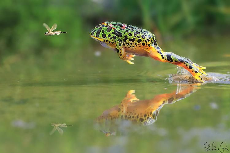 ~Protect, cherish and respect #wildlife~  Photo of the day by Shikhei Goh