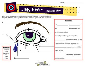 Parts of the eye outside view diagram students and eye what do your students know about the outside parts of the eye this mini fact ccuart Image collections