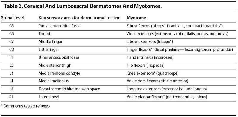 Reflexology - Myotomes on the frontside