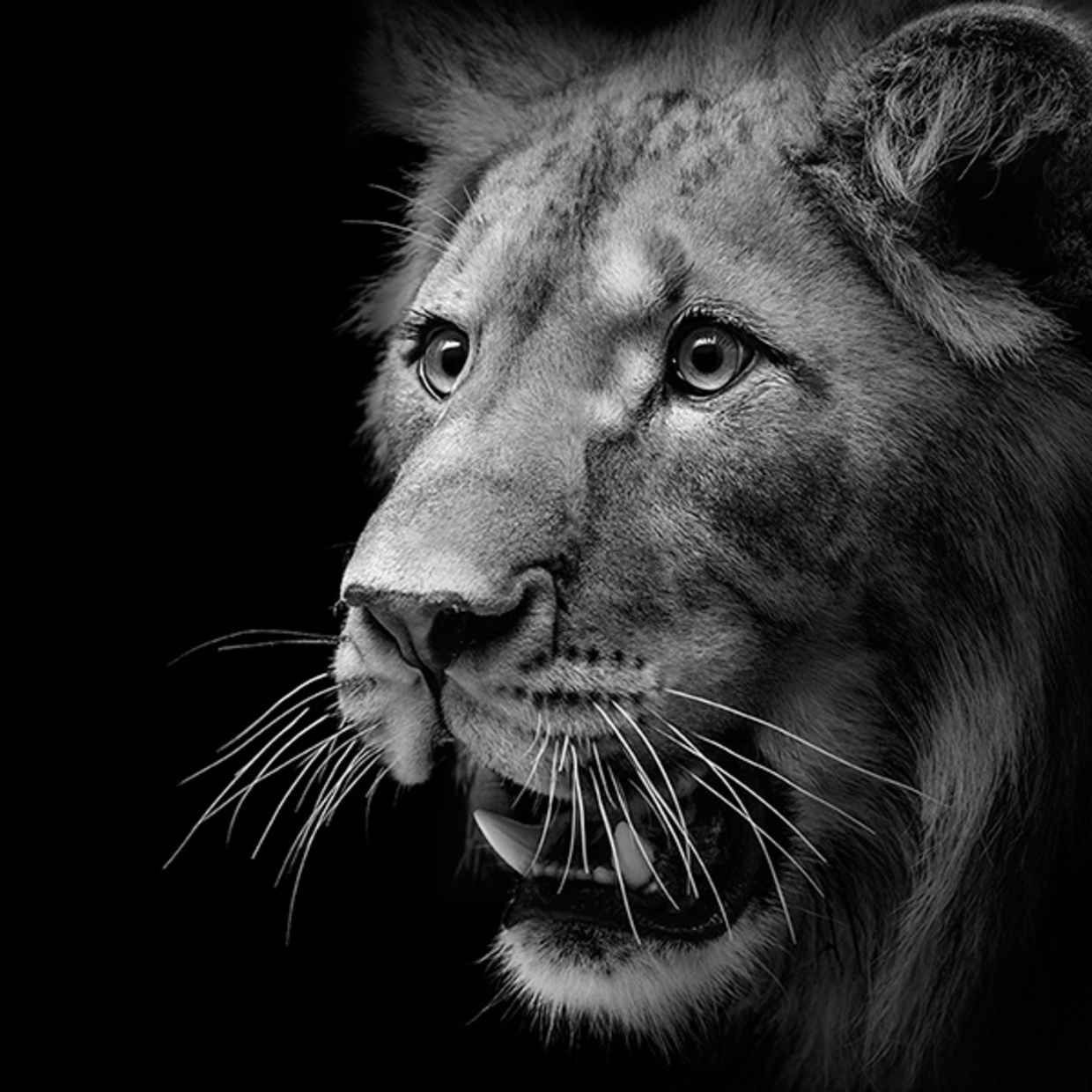 Amazing Black And White Animal Photography By Lukas Holas Animal - Breathtaking black and white animal portraits by lukas holas