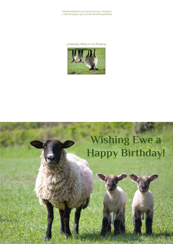 Funny birthday card sheep birthday card ewe lamb birthday wishing ewe a happy birthday greeting card by rmdoltonphotography on etsy kristyandbryce Image collections