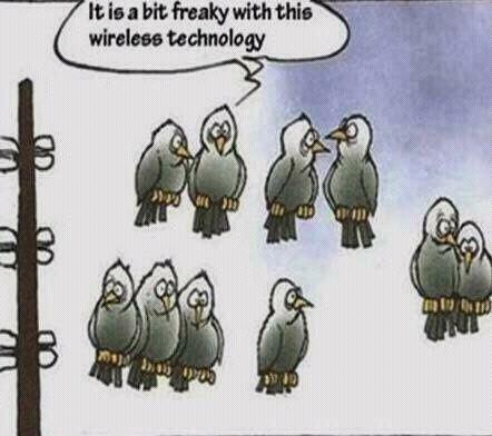 Birds on wireless technology