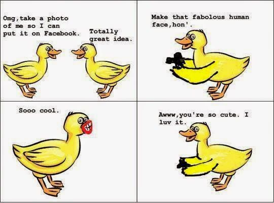 Funny Pictures, Videos, Jokes.: Funny Duck's Photo shoot for Facebook