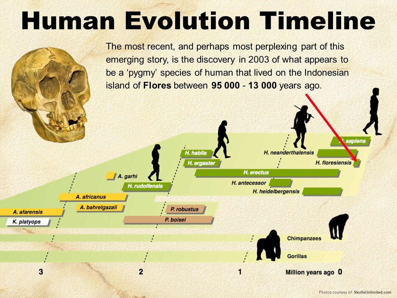 diagram of evolution timeline fisher snow plow wiring afbeeldingsresultaat voor human