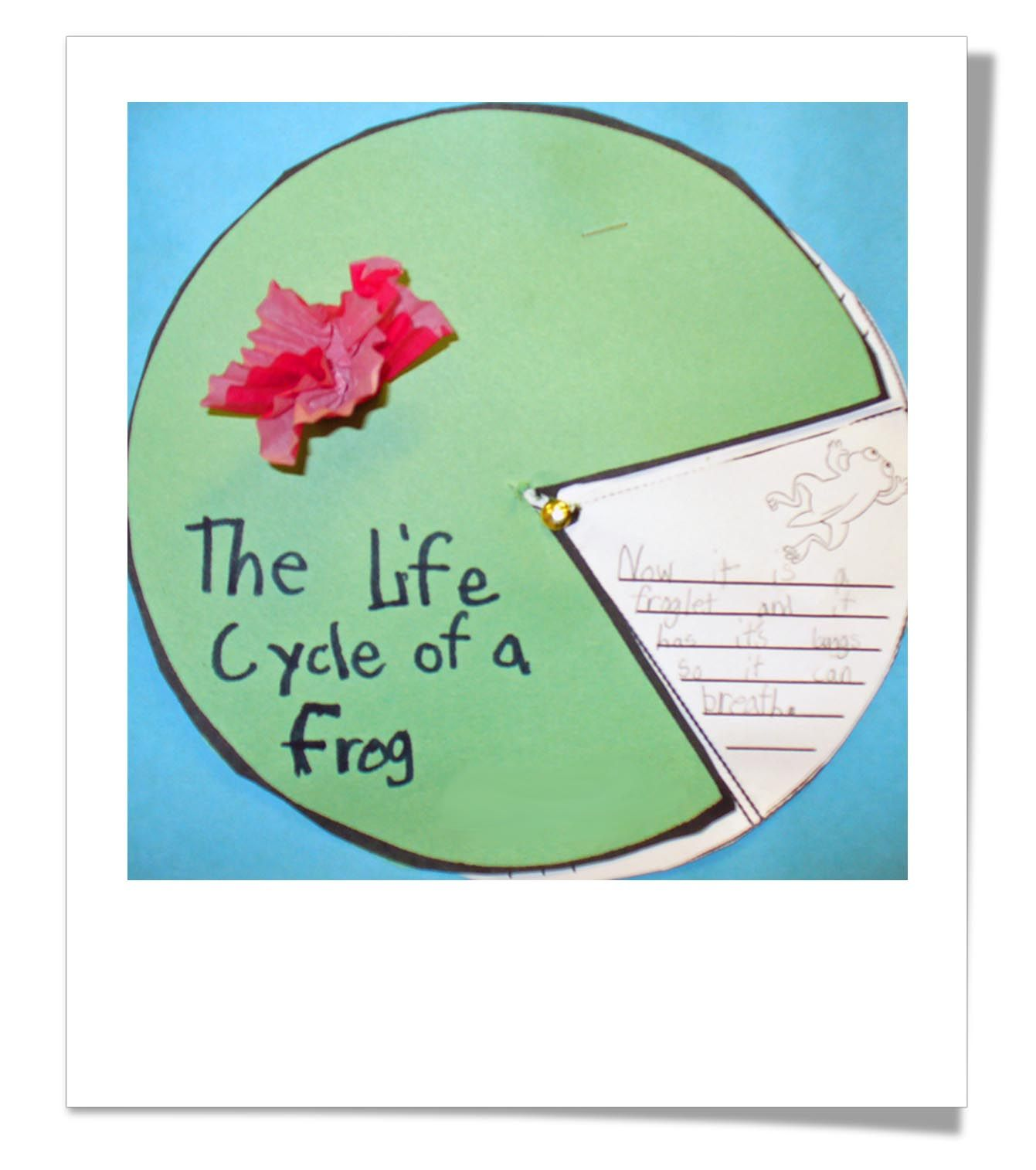 Life Cycle Frog Product