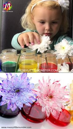 Colour Changing Flowers Science Experiment - A fun