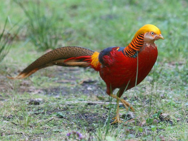 Top 7 Most Beautiful Birds In The World