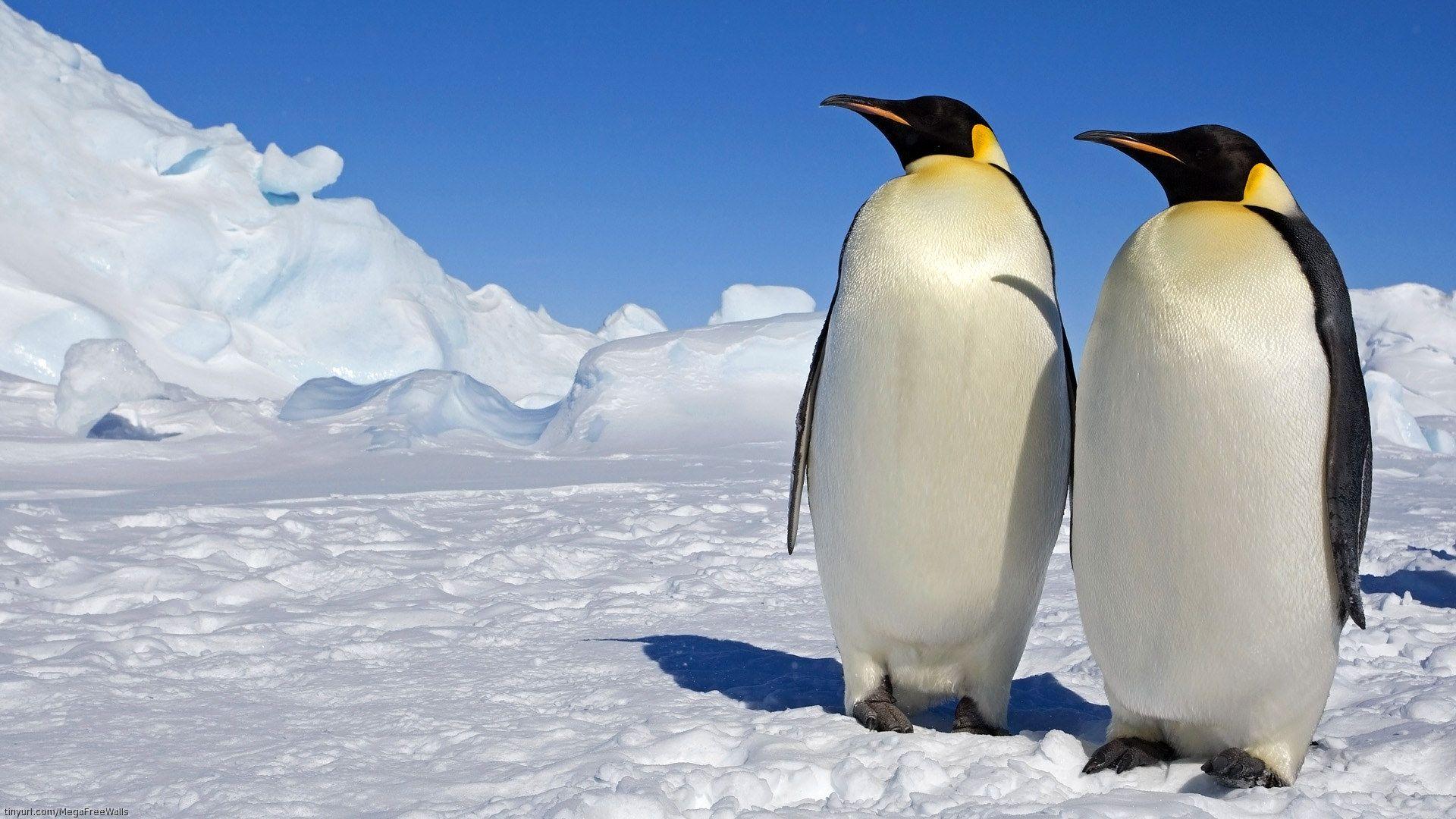 Пингвин красивая картинка