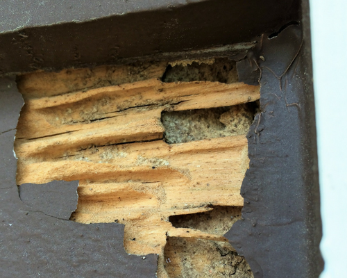 how to pay for termite damage