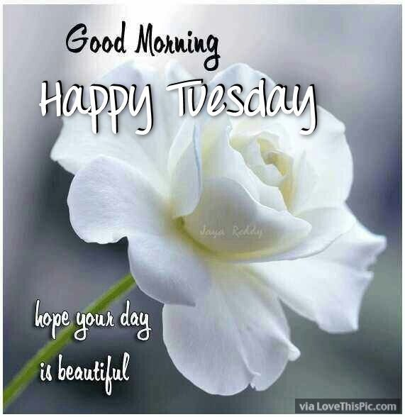 Good Morning Happy Tuesday Hope Your Day Is Beautiful Good
