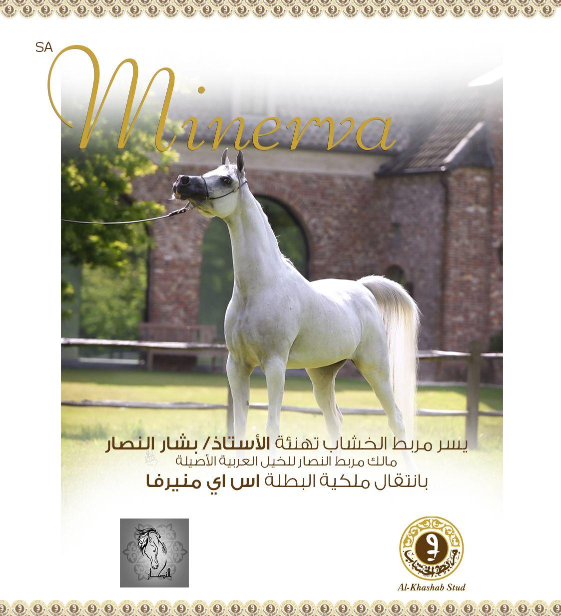 الخشاب منيرفا إلى مربط النصار الف مبروك Horses Arabian Horse Animals