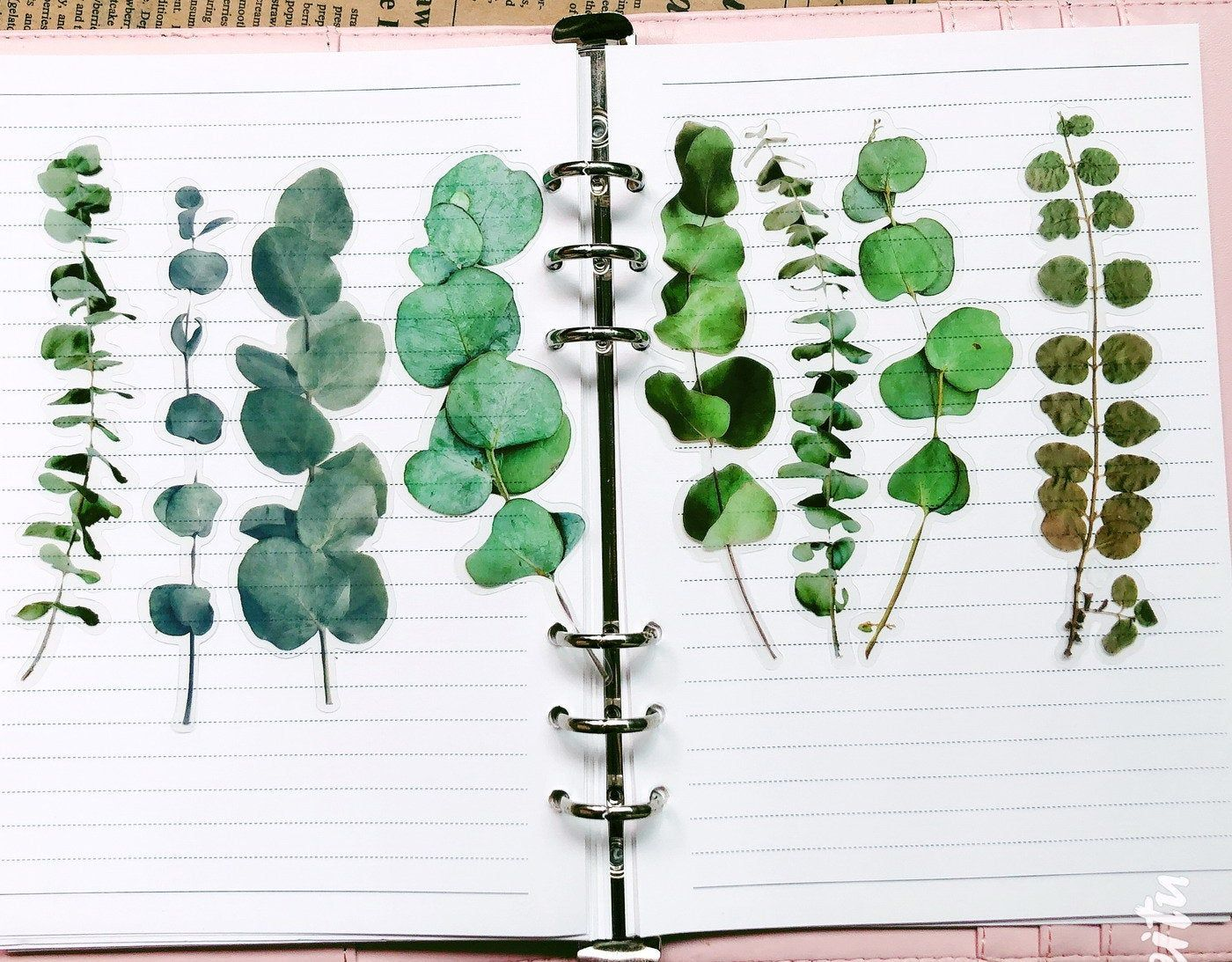 20 Pcs Eucalyptus Leaf Large Clear Sticker Botanicals Pvc Etsy In 2020 Clear Stickers Eucalyptus Leaves Filofax Stickers