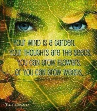 Your Mind Is A Garden Your Thoughts Are The Seeds You Can Grow