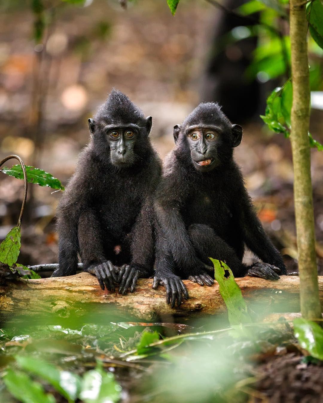 Like Us Nonhuman Primates Convey Moods Through Facial