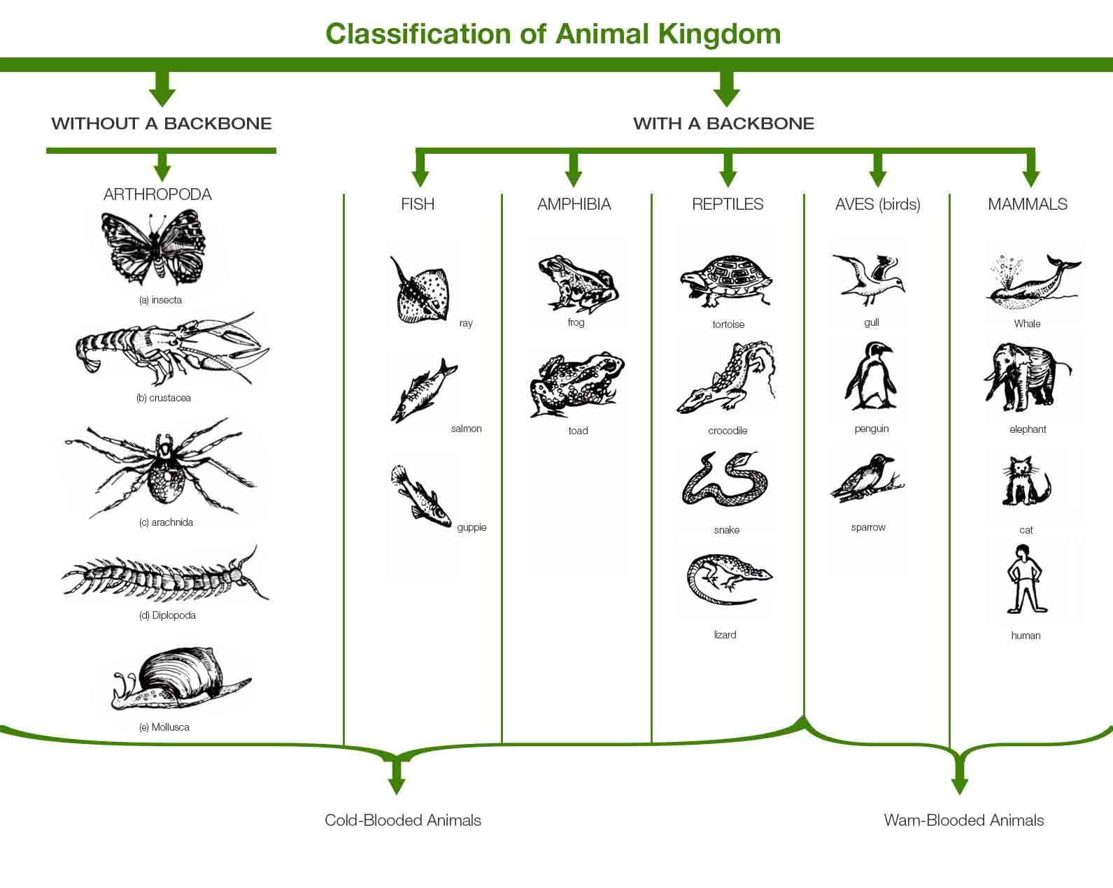 Classification Of Animal Kingdom