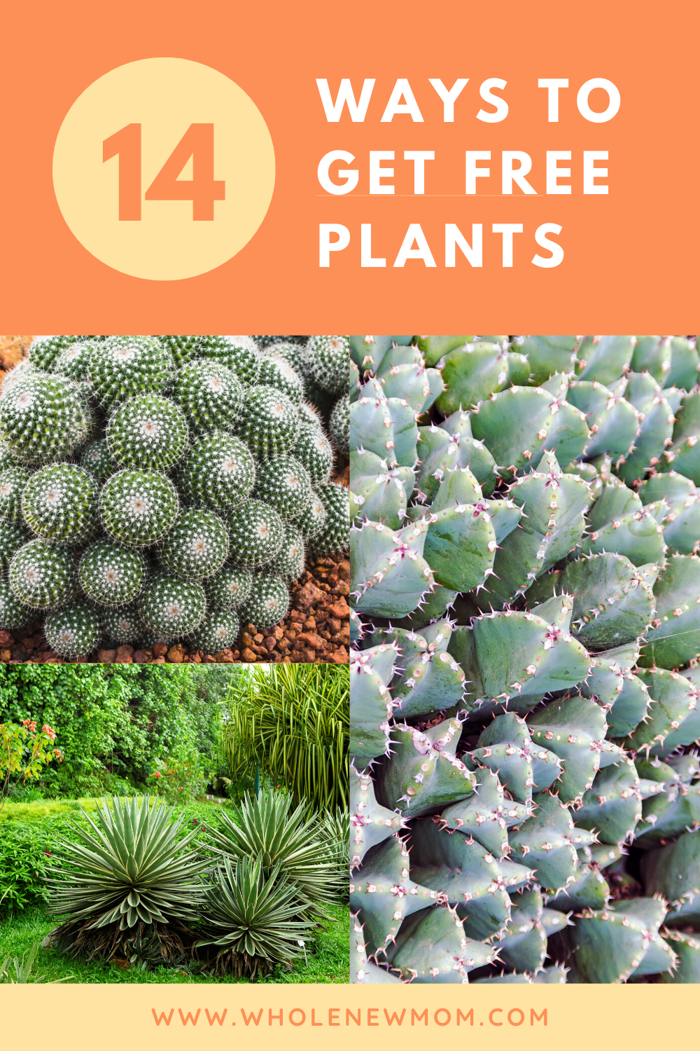 14 Ways to Get Free (or cheap) Plants for Your Garden ...