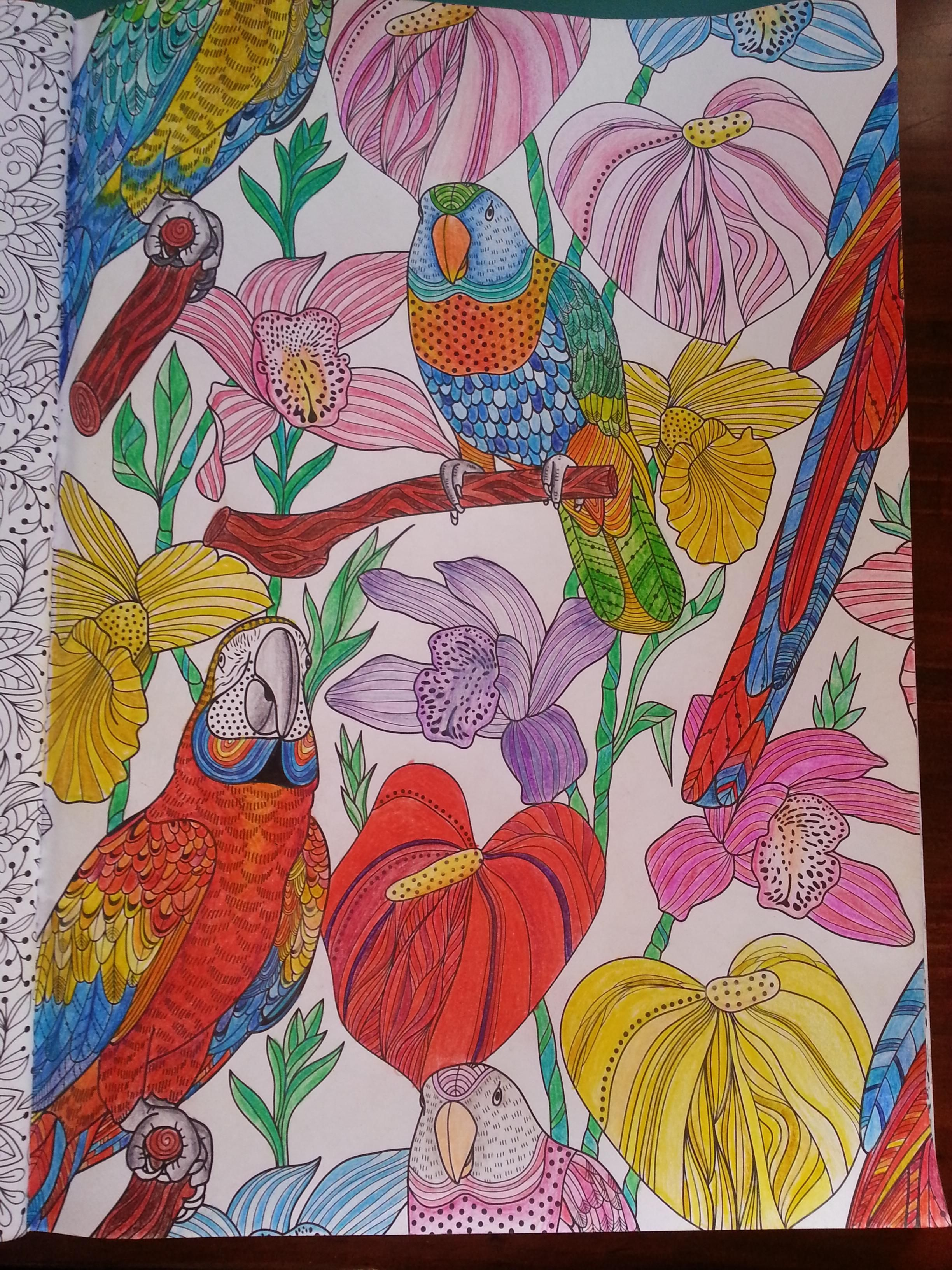 Color me draw me animal kingdom book - I Think This Might Be A Page From Animal Kingdom Color