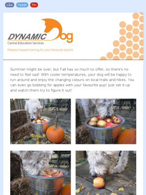 Check out our Fall 2013 newsletter! www.mydynamicdog.com