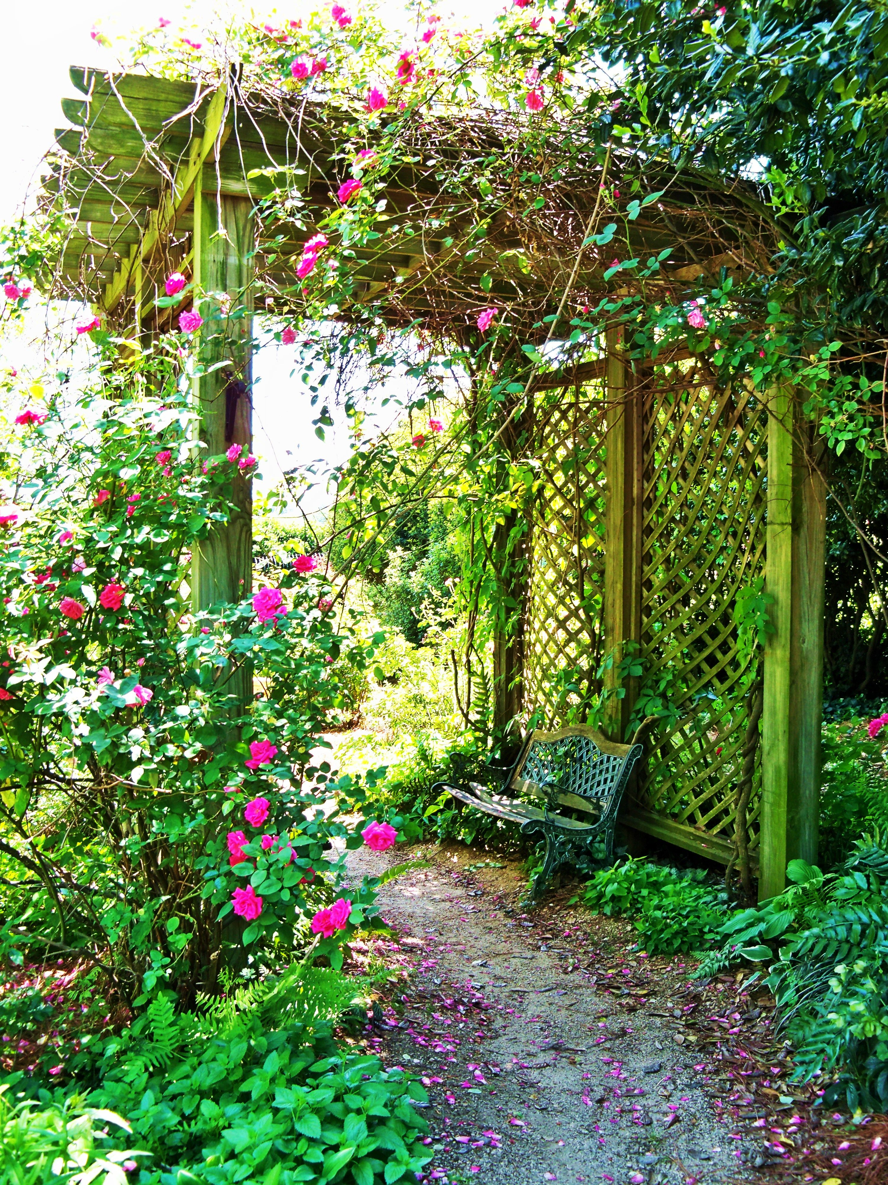 Top landscapers in charlotte nc - Mcgill Rose Garden In Noda Of Charlotte Nc